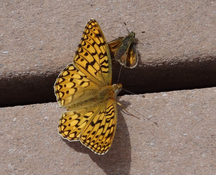 gold butterfly and moth